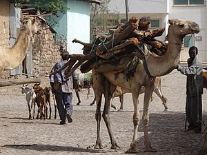 Shire Inda Selassie - Image: Street Scene with Camels Shire Ethiopia (8699560440)