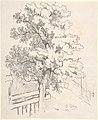 Study of a Tree MET DP803693.jpg