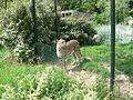 Suisse zoo (33).jpg