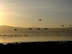 Sunrise at Lake Nakuru.jpg