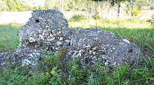 Sapelo Island - Tabby ruins of Spalding's 1809 sugar mill