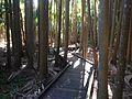 Tamborine Mountain Botanic Gardens 05.JPG