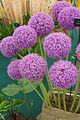 Tatton Park Flower Show 2014 056.jpg