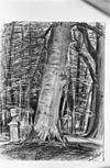 tekening tuinvaas in park door e.hovy, 1870, herkomst collectie croockewit, renswoude - renswoude - 20185394 - rce