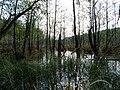 Teufelsbruch swamp next to crossing path in autumn 2.jpg