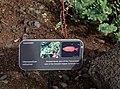 That Fishy Plant (23833105516).jpg