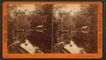 The Bluffs, Oklawaha River, Fla, from Robert N. Dennis collection of stereoscopic views.png