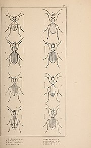 The British Coleoptera delineated (1840) (19794739674).jpg
