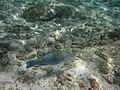The Maldives - panoramio - thor hestnes (1).jpg