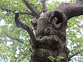 The Old Man of the Woods - geograph.org.uk - 1426782.jpg