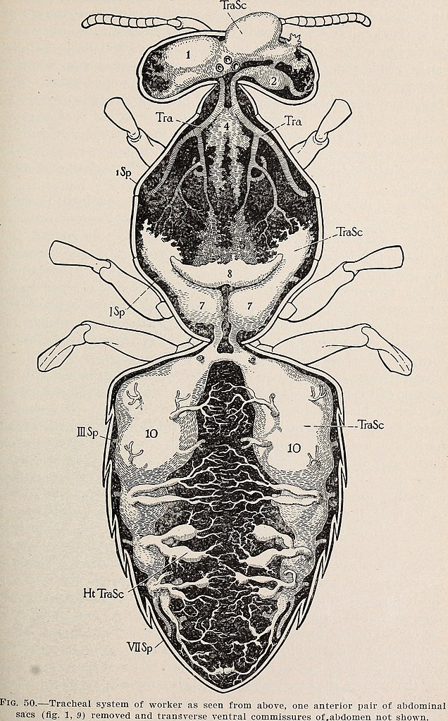 Attractive Honey Bee Anatomy Crest - Anatomy And Physiology Biology ...