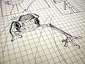 The pen sketch of a frog.jpg