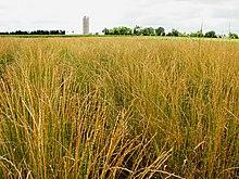 List Of Soybean Foods