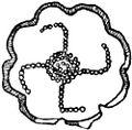 Thomas Wilson The Swastika Fig 36 Bronze Pin-Head from Akhtala Armenia.jpg