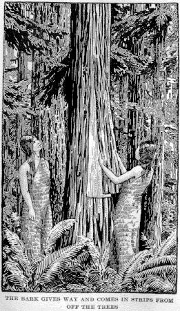 Thuja plicata bark