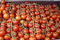 Tomato from Armenia (հայաստանյան լոլիկ).jpg