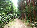 Trail to Lago do Fogo, São Miguel Island, Azores - panoramio - Eduardo Manchon (7).jpg