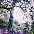 Tree - panoramio (60).jpg