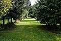 Tree plantation in Nuthurst village, West Sussex, England 02.jpg