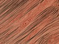 Trichinella spiralis (YPM IZ 093413).jpeg