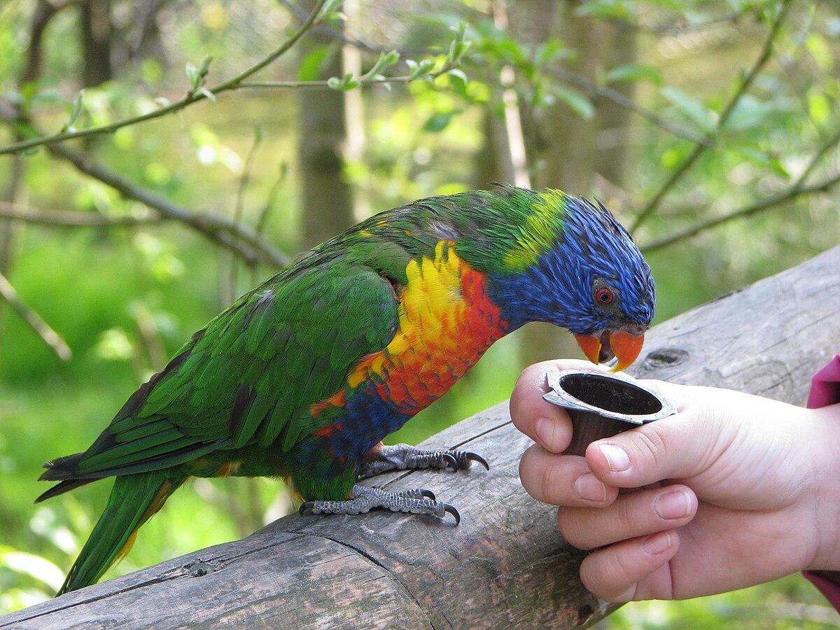 Marlow Vogelpark