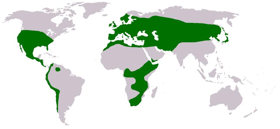 Trifolium Distribution