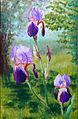Trois-iris.jpg