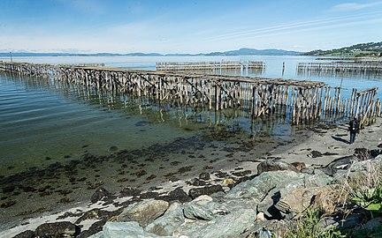 Trondheimsfjorden tre 6.jpg