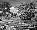 Tsavo River early 1950s.jpg