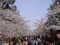 Tsuyama Cherry Blossom Festival.JPG