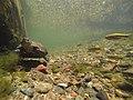 Turtle 00495.jpg
