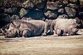Two Rhinos (16964558023).jpg
