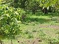 UNESCO Niokolo-Koba National Park Senegal (3687361380).jpg