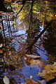 Upsidedown-tree-creek-reflection - West Virginia - ForestWander.jpg