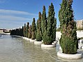 Valencia, bomen in water (38619214112).jpg