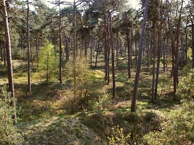 A forest in the geographically diverse Veluwe landstreek, Gelderland Veluweforest.jpg