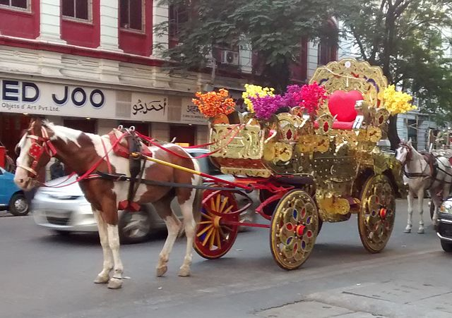A Golden Victoria pulled by a Brown and White horse on BEST Marg in Colaba.