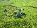Vietnamese farmer.JPG