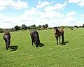 View across horse paddock - geograph.org.uk - 1385780.jpg