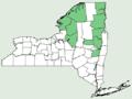 Viola adunca var adunca NY-dist-map.png