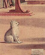 Un chien au début du XVIe siècle.