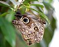 Vlinder (2).JPG