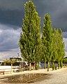 Wädenswil - Schifflände 2012-09-13 18-08-15 (Xperia S).jpg
