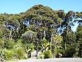 Waitakere Ranges Regional Park, New Zealand.JPG