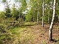 Waldstück mit Birken.jpg