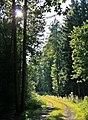 Waldweg im Porschendorfer Forst - geo.hlipp.de - 20913.jpg
