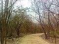 Walkway at KBR Park 01.jpg