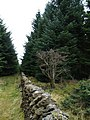 Wall and track, Glentress Forest. - geograph.org.uk - 311624.jpg
