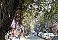 Waterloo Street Banyan (14837507771).jpg