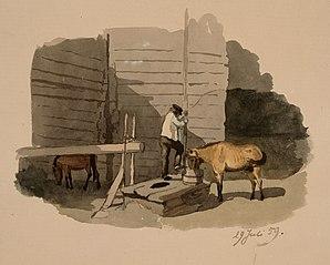 Frithjof Federley juottaa kaivolla hevostaan
